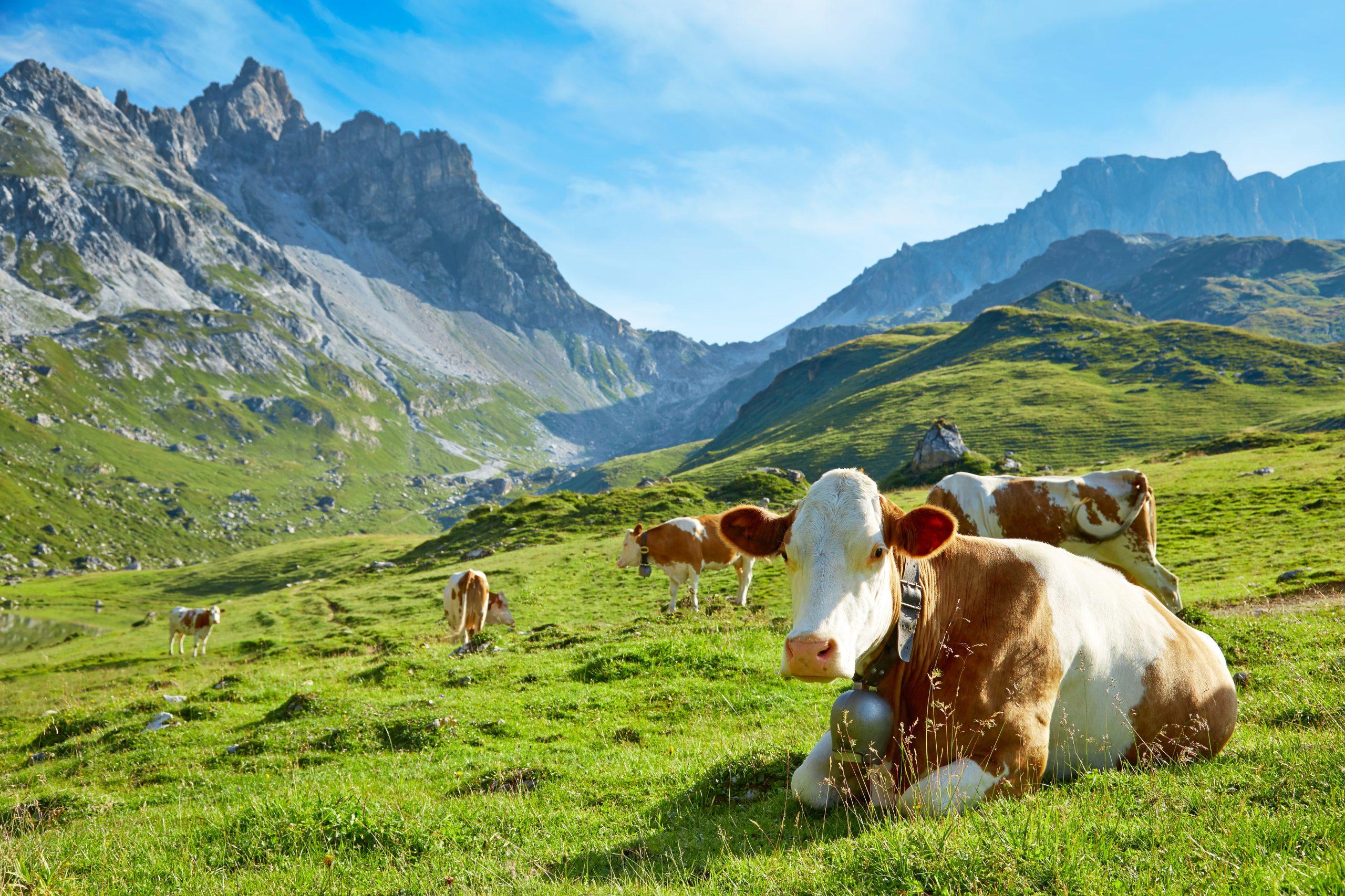 Alm in Switzerland